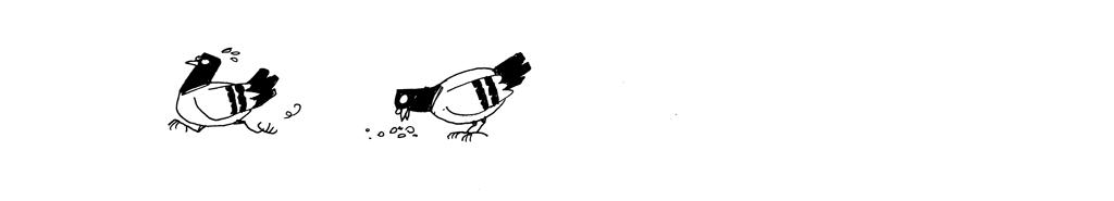 pigeons-miettes_03