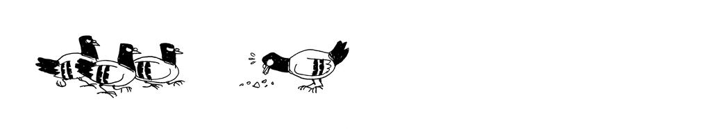 pigeons-miettes_04