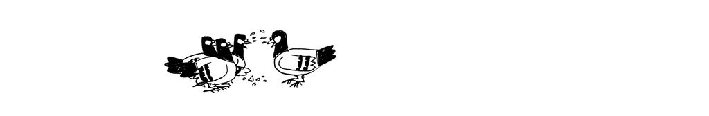 pigeons-miettes_05